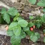 Les grangettes conques chambre et table d'hôte fruits du jardin