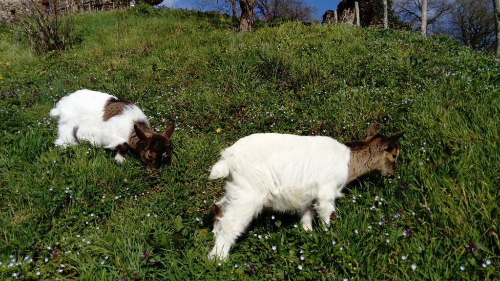 Le Bonheur est dans l'herbe